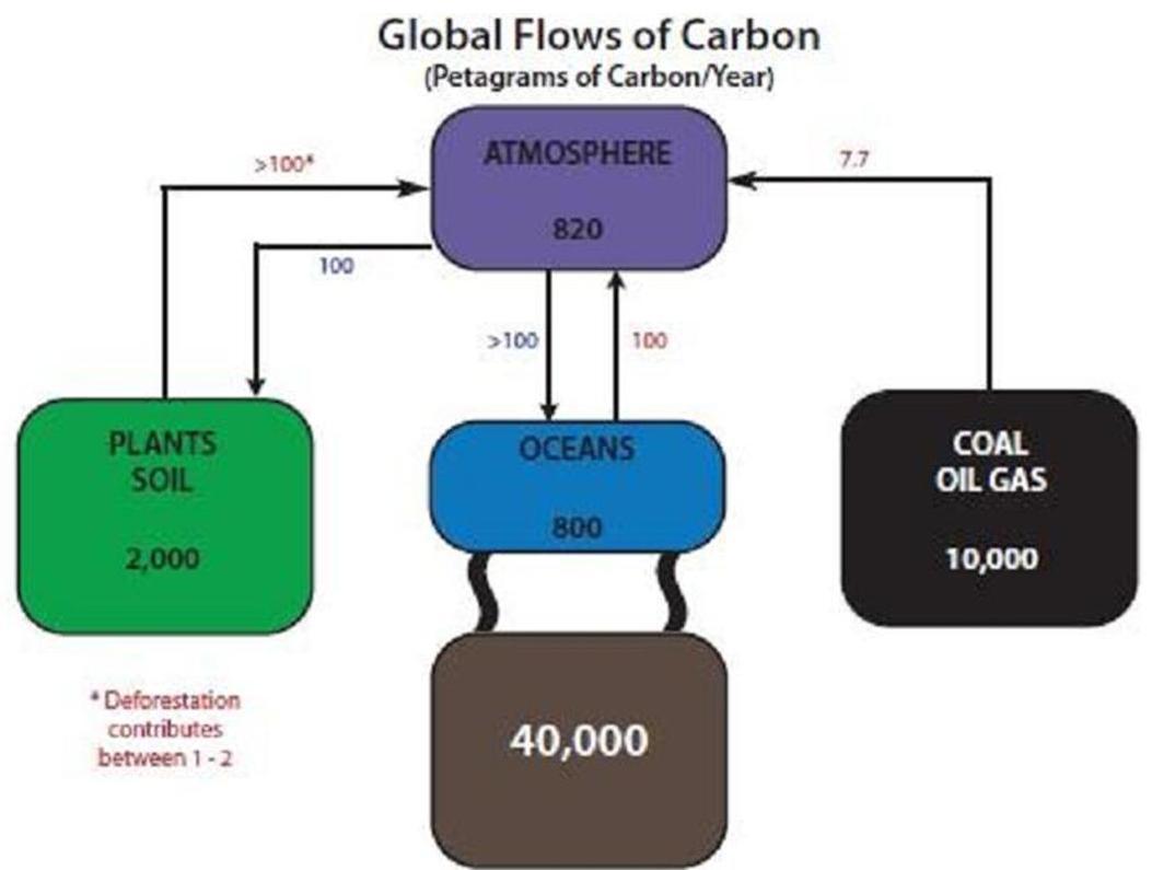 Carbon Cycle Diagram 1
